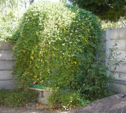 rain water tank screened with plants g 250