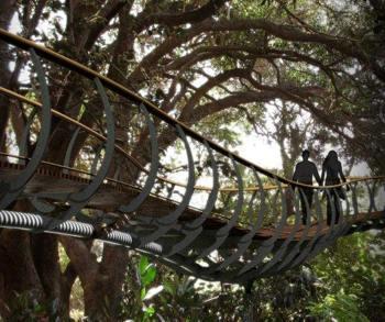 Artists impression of Kirstenbosch Canopy Walk.