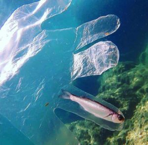 Fish in plastic glove Conoce Honduras FB post