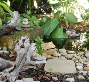 Garden pond with driftwood photo by KimK of Green  audits