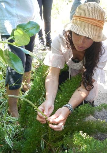 Roushanna harvests wild asparagus at Good Hope Gardens