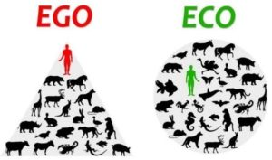 Ego vs Eco relationship